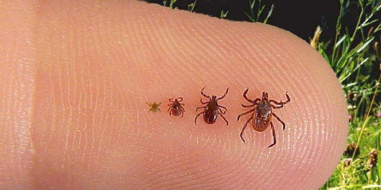 Candian provinces see growing tick infestation