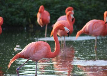 Zoo flamingo euthanized after child disables it with rock