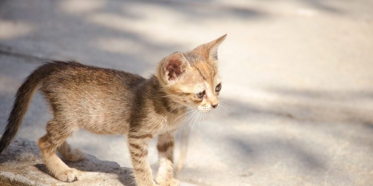 UPDATE: Woman did not throw cats onto highway