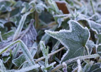 BUNDLE UP! Frost advisory across Quebec and Ontario