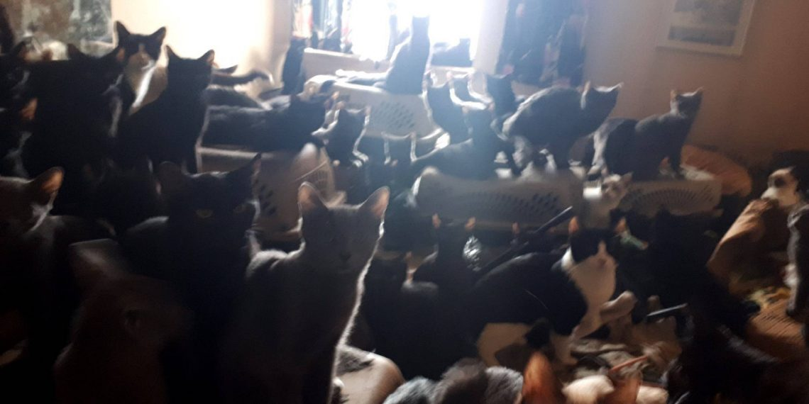 Toronto woman hoarded over 300 cats in her apartment