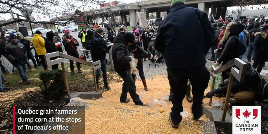 Quebec farmers enraged with Trudeau's inaction on CN rail strike dumped corn outside his office