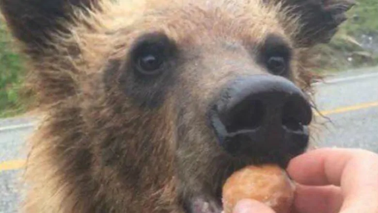 B.C. man who fed Timbits to bear fined $2,000