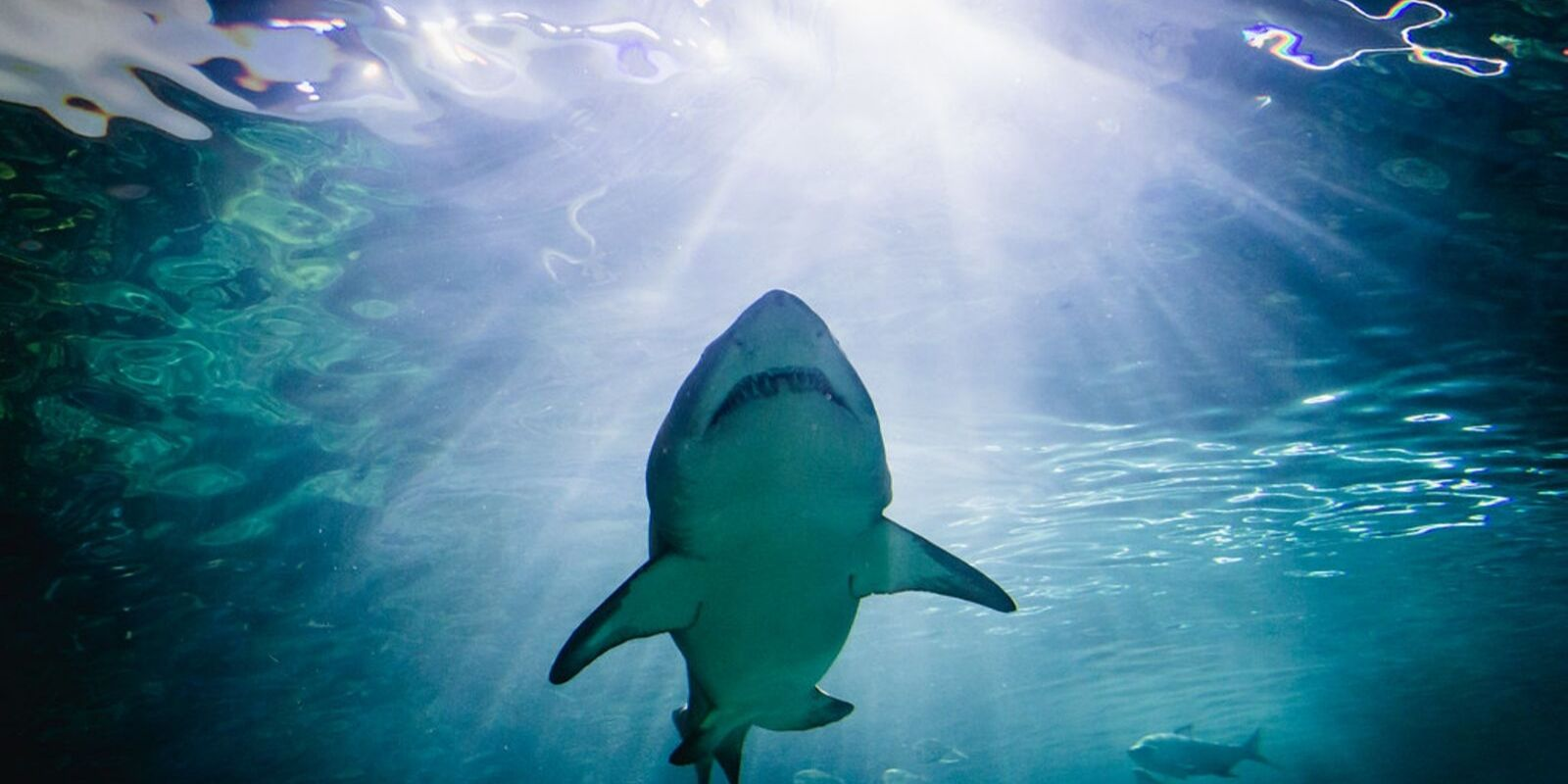 Man who swam naked with sharks in  Ripley's Aquarium pleads guilty to mischief