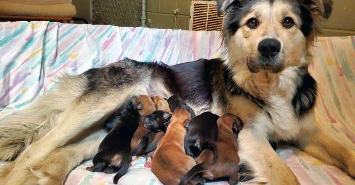 Mother dog and nine pups found abandoned in sealed box in B.C. landfill