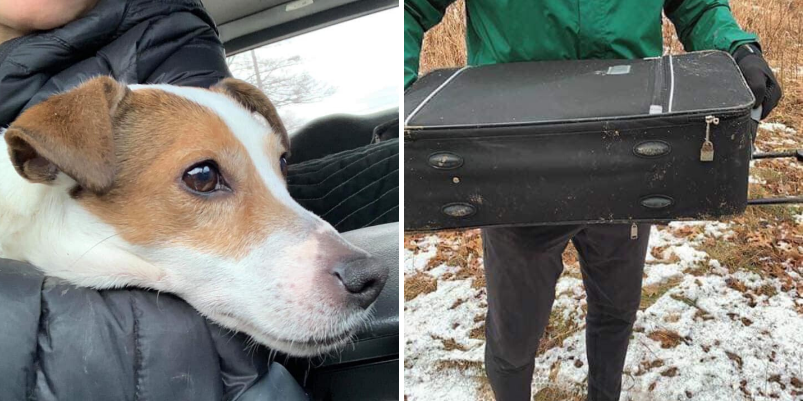 Toronto dog 'in good health' after being found in suitcase by joggers