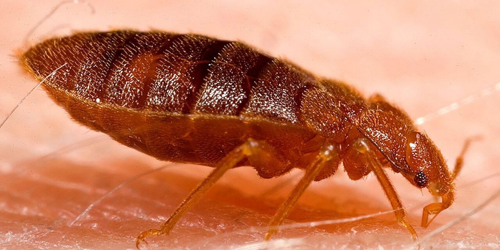 Montreal Immigration and Refugee Board forced to close down due to bed bug infestation