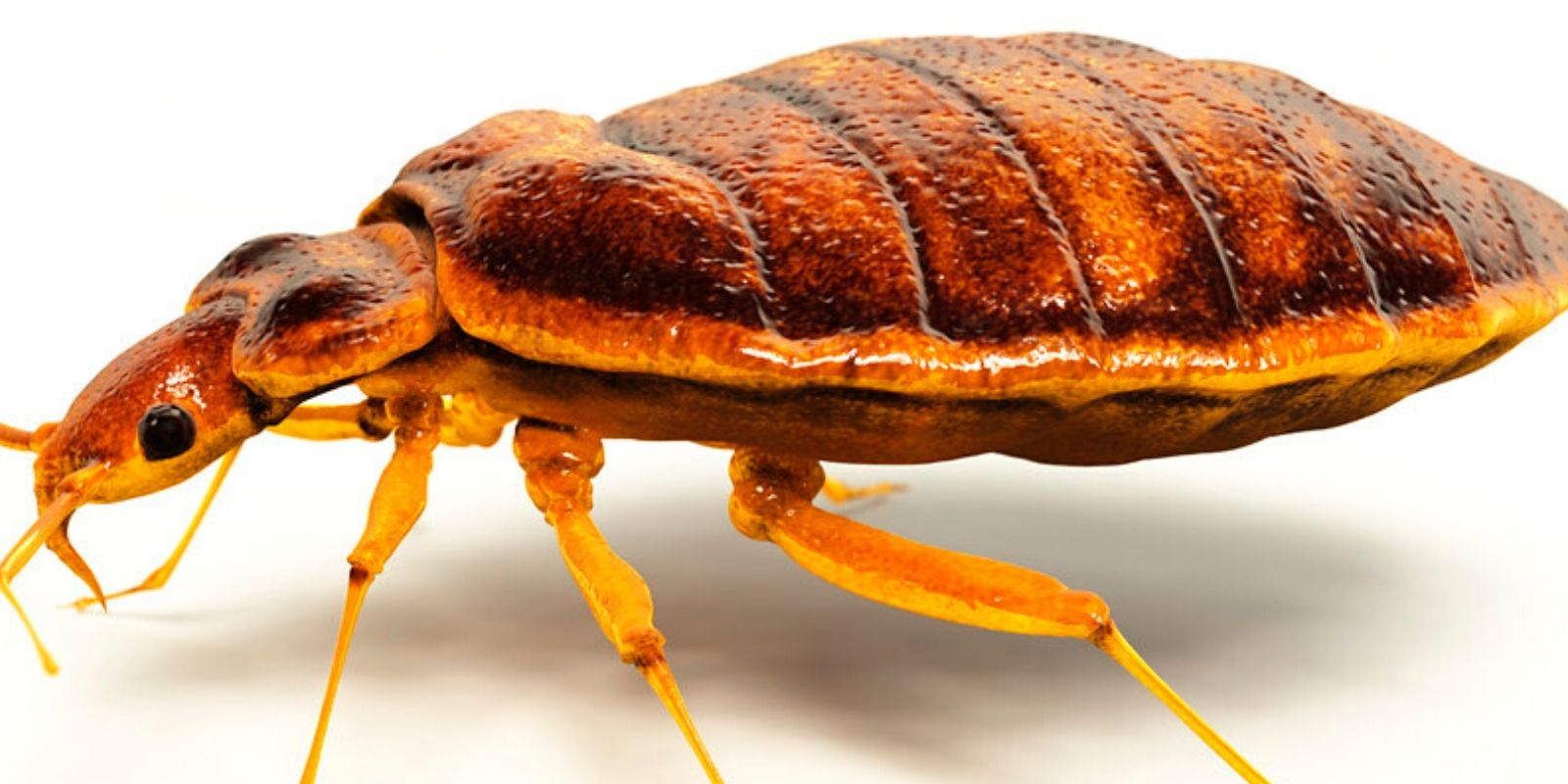 Two more bedbug outbreaks found in government buildings