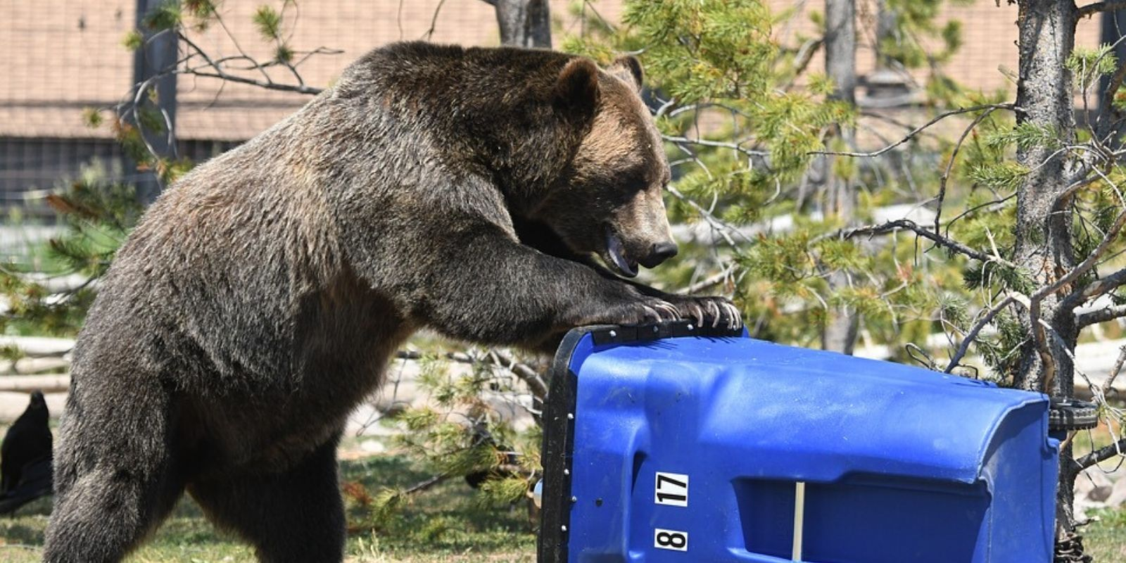 Five bears euthanized after residents see them eating garbage