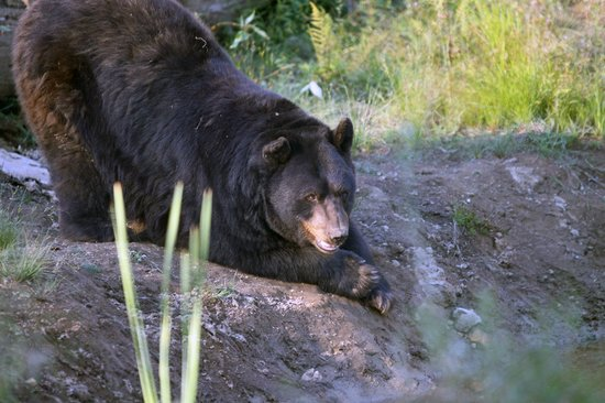 Young child hospitalized after allegedly being bitten by bear at Vancouver Zoo