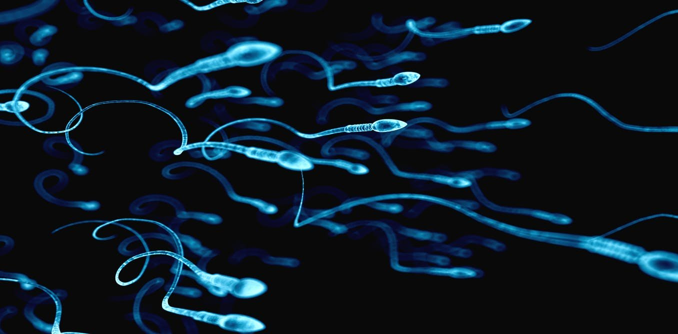 Sperm counts continue to drastically drop in Western men