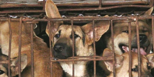 China bans wildlife consumption, including dogs and cats