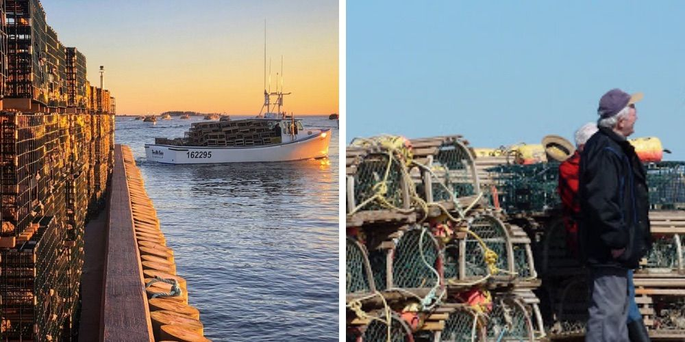 Lobster season starts today with students replacing foreign workers