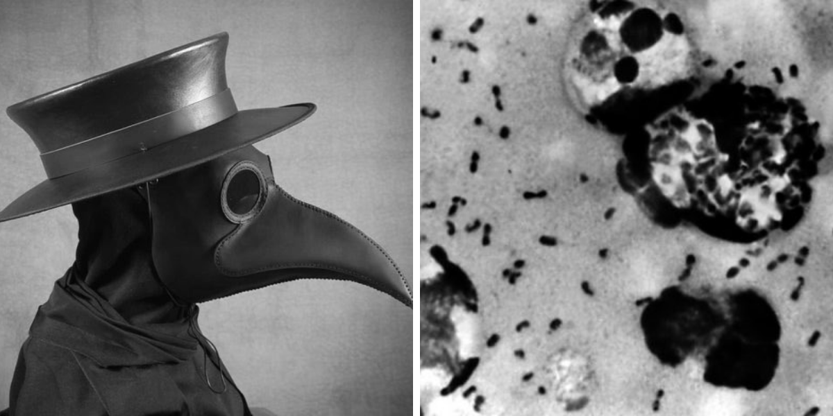 China reports suspected bubonic plague cases in Inner Mongolia city