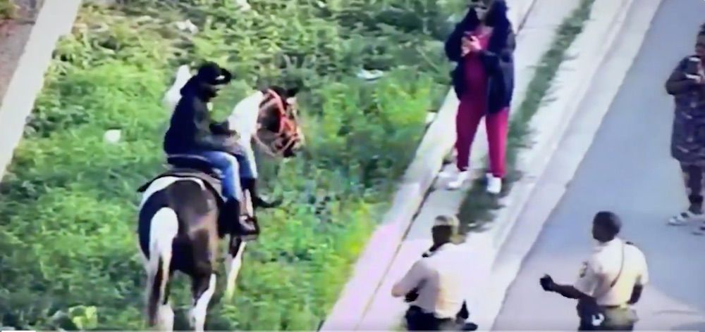 Chicago mayor's 'Census Cowboy' tortured his horse on a seven-mile highway 'protest run'—now it may be put down