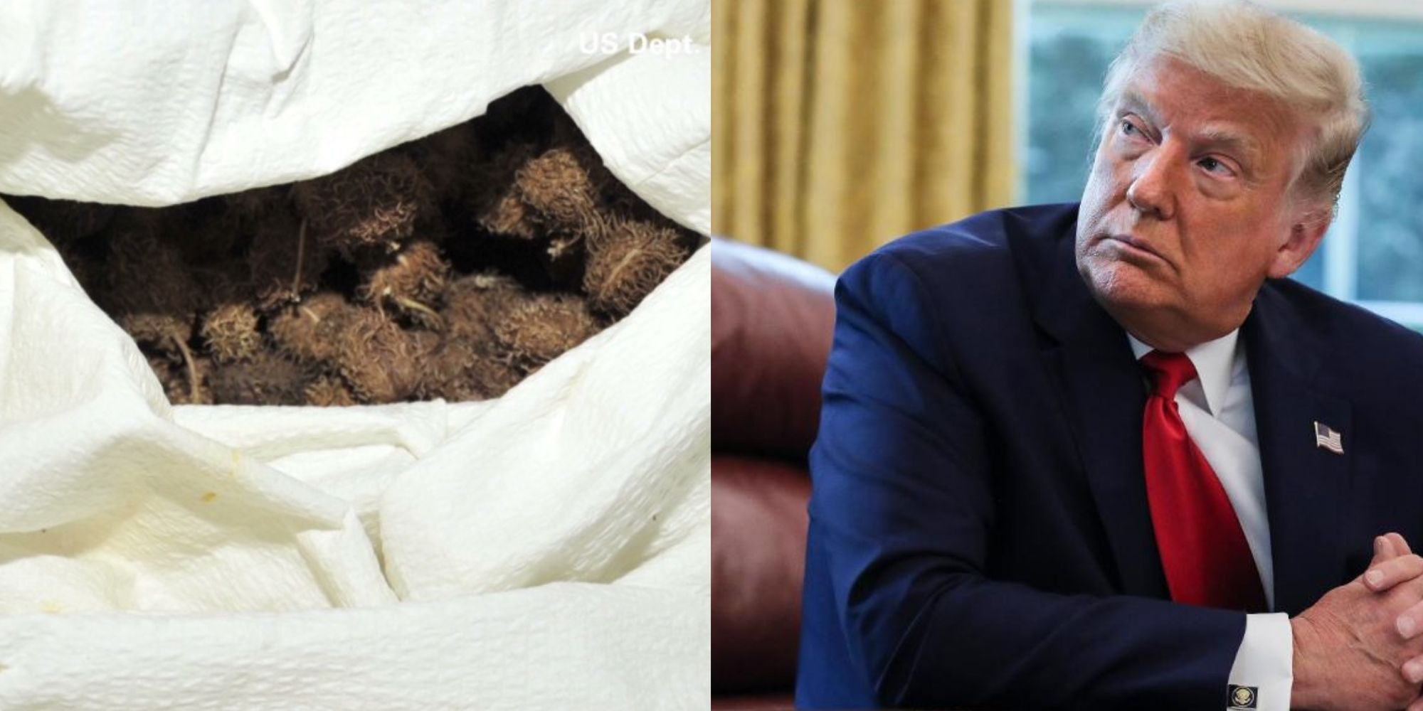 BREAKING: Secret Service intercepts package addressed to President Trump containing deadly ricin