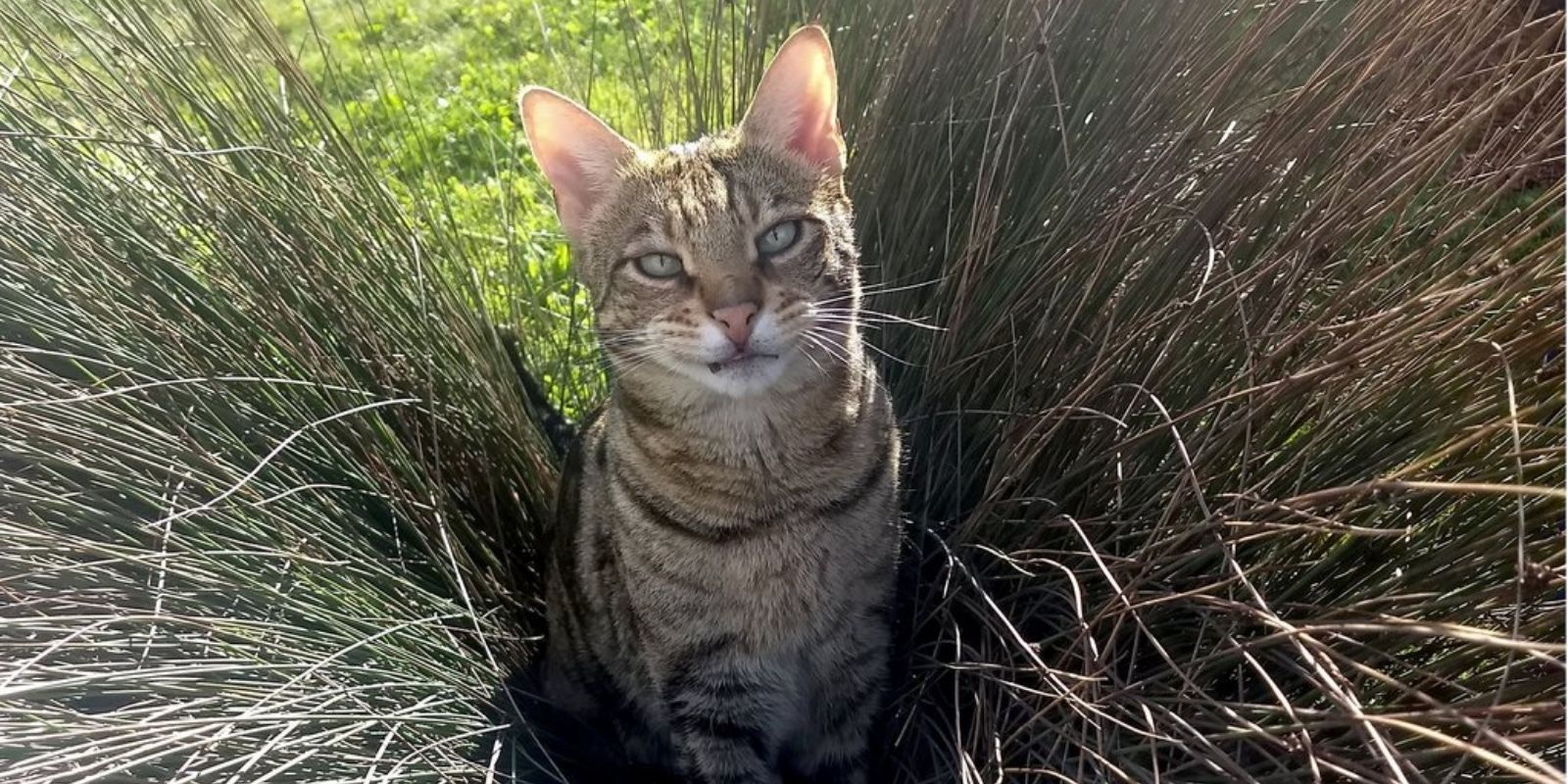 Pawshank redemption: County pursues multi-year legal action against tabby cat