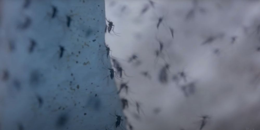 Genetically modified mosquitoes to be released in Florida Keys