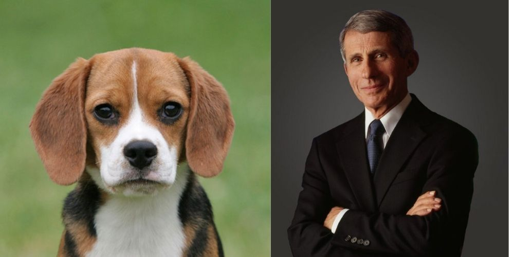 REVEALED: Documents show Fauci approved public funds for puppy-killing experiments